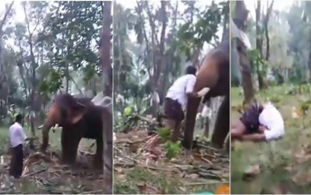 elephant-attacked