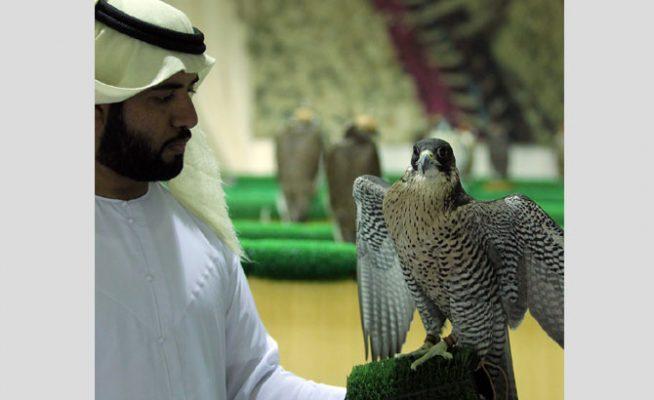 falcon-beauty-show