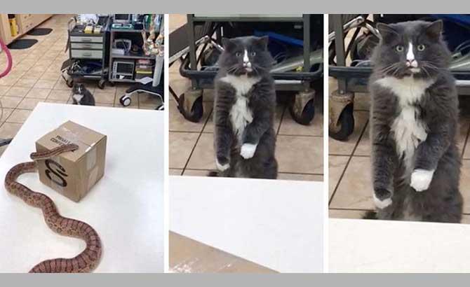 Stunned-Cat